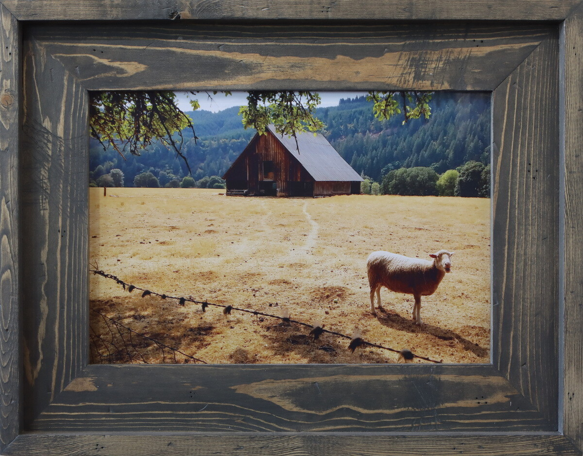 """Barn and Sheep"""