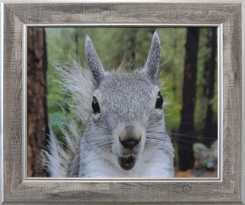 """""""Squirrel Face"""""""