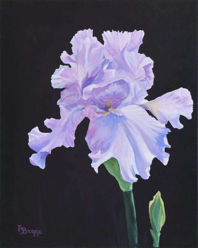"""""""Simple Iris"""""""