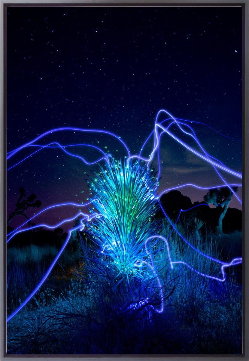 """""""Yucca Regeneration"""""""