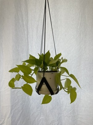 Pflanzenhänger
