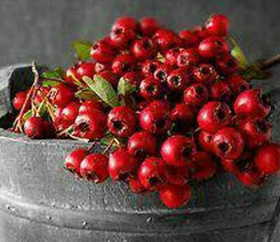 Lolablue-Candle-Cranberry Forest