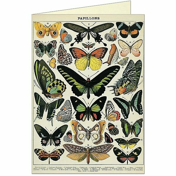 Butterflies Blank