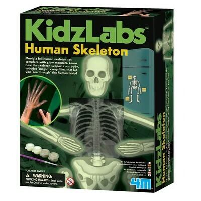 Kidz Labs Glow Human Skeleton