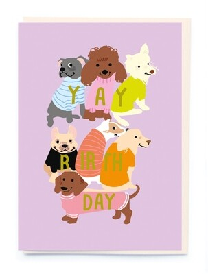 Dogs in Letter Jumpers