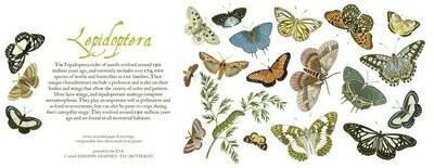 Butterflies and Moths Card