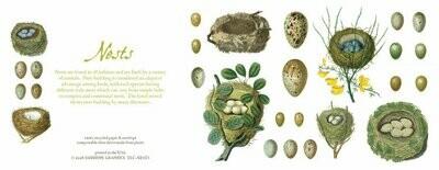 Bird Nests Card