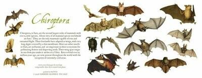 Bats Card