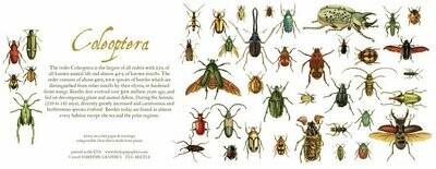Beetles Card