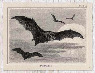 Bat Specimen Card