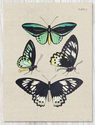 Butterfly Plate II Card