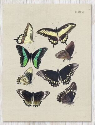 Butterfly Collection Plate VI Card