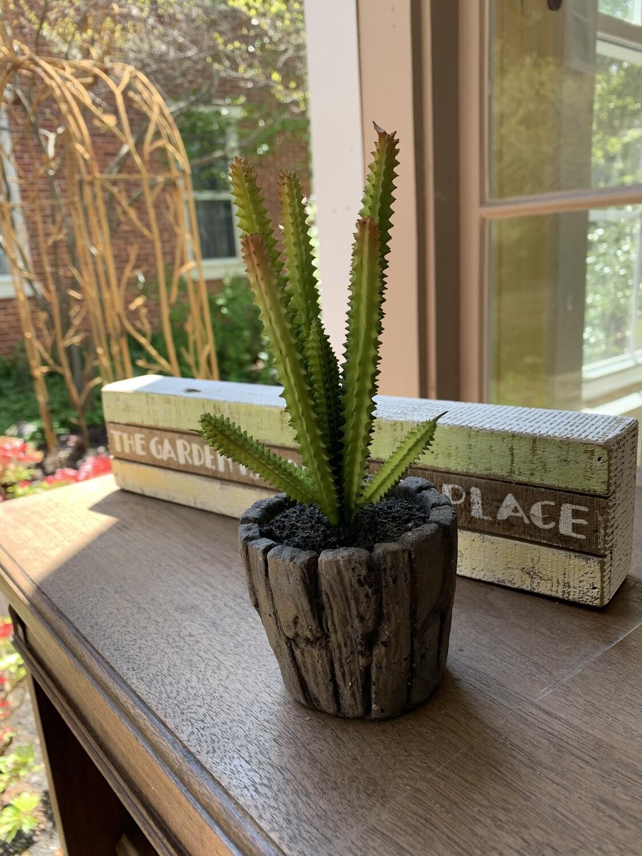 P&L- Potted Succulent