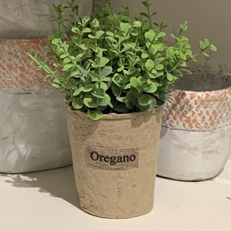 P&L- Oregano Paper Planter