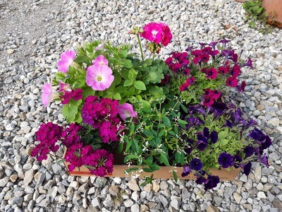 Blumen Box 1