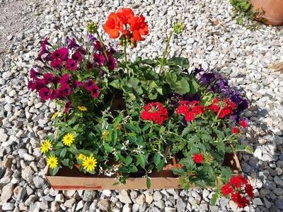 Blumen Box 2