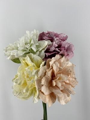 Peony Bloom Stem