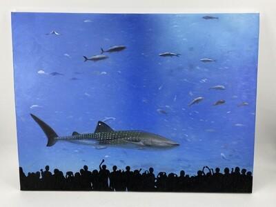 Vietnam Aquarium Art
