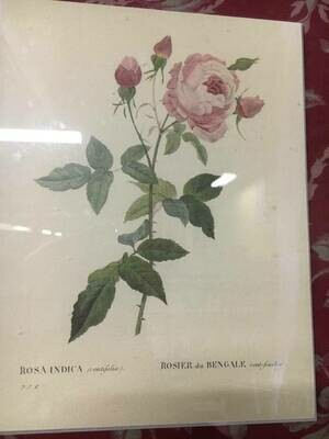 Framed Art - Pink Roses