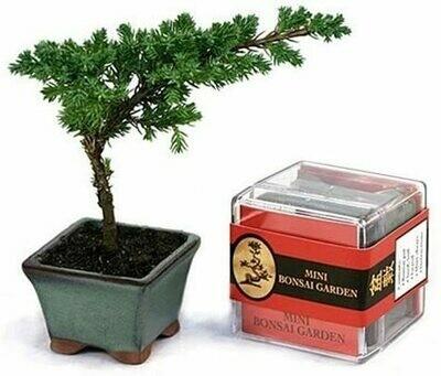 Bonsai G Grow Kitarden