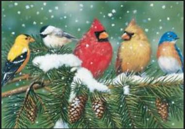 Cardinals & Friends