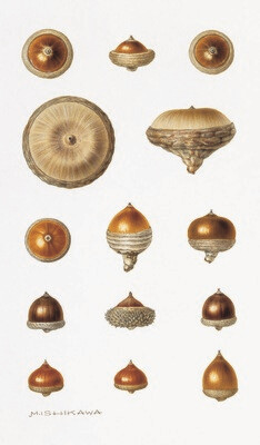 Acorns Note Cards: Big Time Acorn Showers Means...