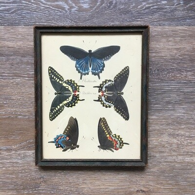 Vintage 1932 Butterfly Print