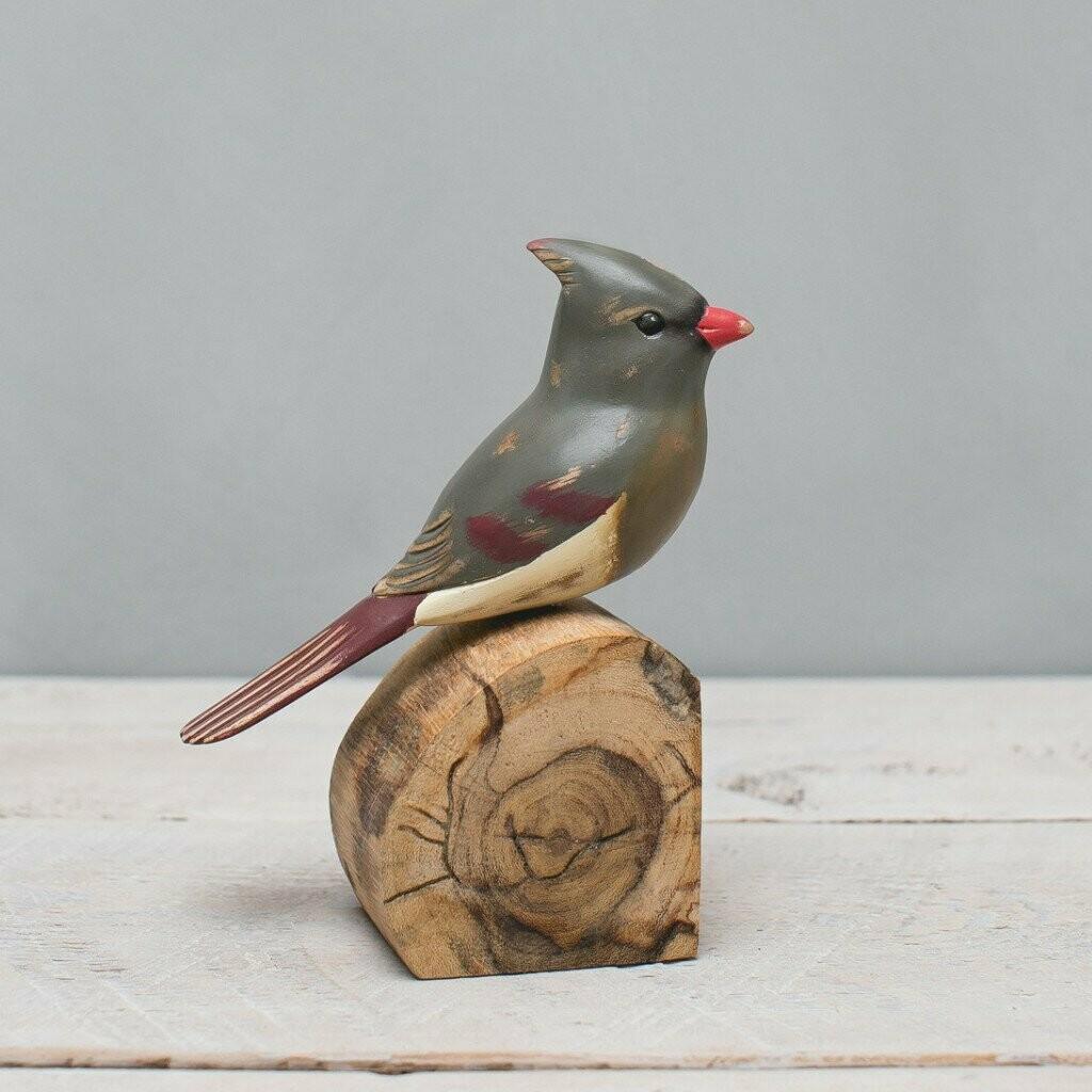 Cardinal - Female - 7