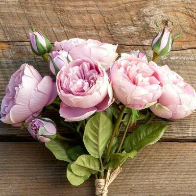 Antique Garden Rose Bondle Maroon Blush