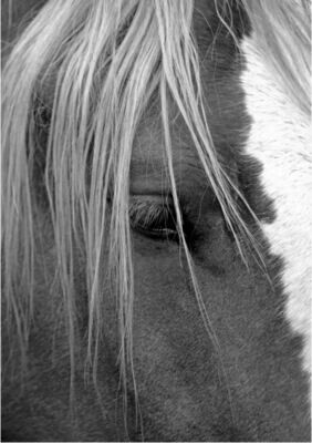 BAR HORSE B&W FINE PHOTOGRAPHY 30X40