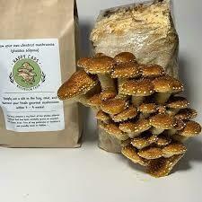 HappyCap Mushroom Kit