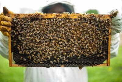 Fall 2020 Bee Class Package