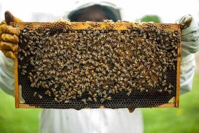9/19/2020 Bee Class 1-3pm