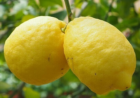 Lemon – Fused Whole Fruit
