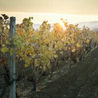 Lambrusco Wine Vinegar
