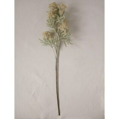 Queen Annes Lace Stem