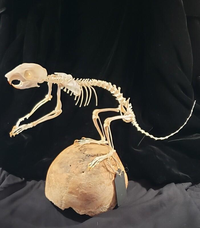 Squirrel on Skull