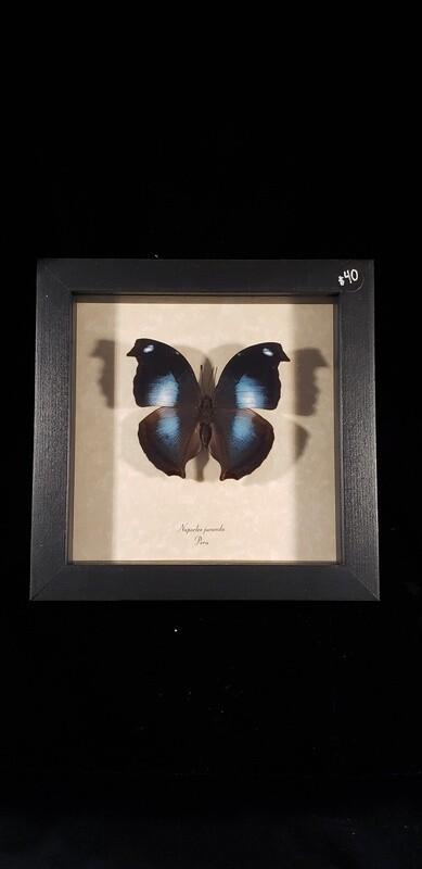 Blue Hatchet Wing