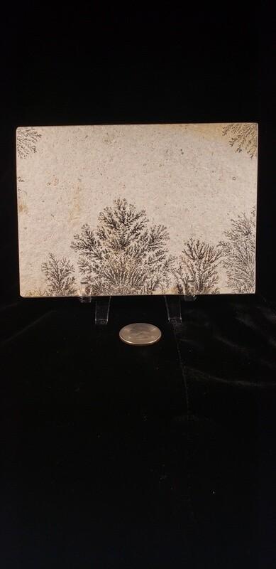 Dendrite Specimen