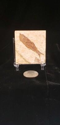 Fish Fossil Mini