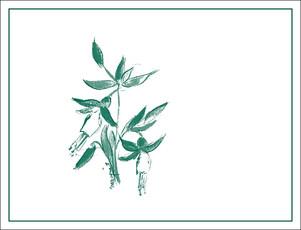 Arnot Roberts Trout Gulch Chardonnay - organic