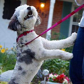 Small Dog Leash/Collar Set