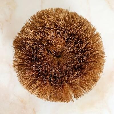 Coconut Scrubbie