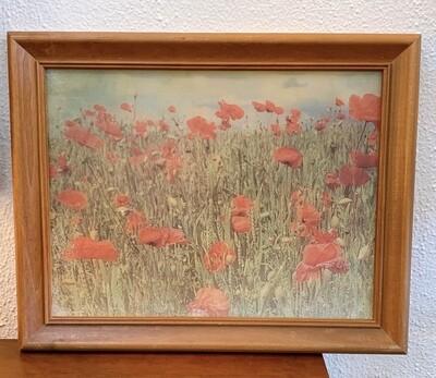 """Fields of Poppies 15"""" x 12"""""""