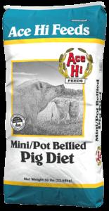 Pot Belly Pig 50