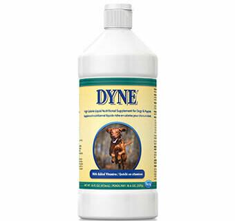 Dyne Dog 16oz