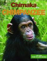 Chimaka The Chimpanzee 00012