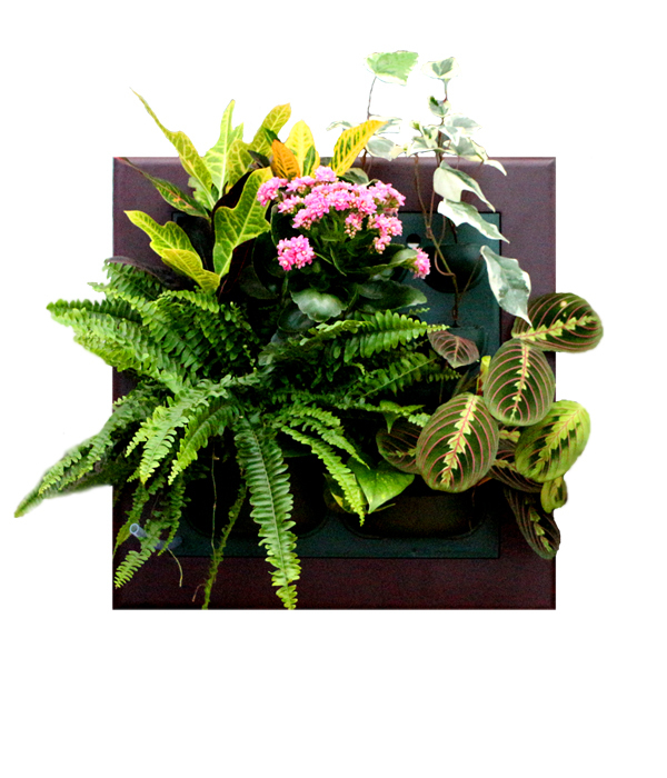 Картины из цветов