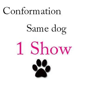 Conformation Same Dog 1 Show - $29 101