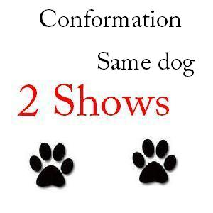 Conformation Same Dog 2 Shows -  $57 102